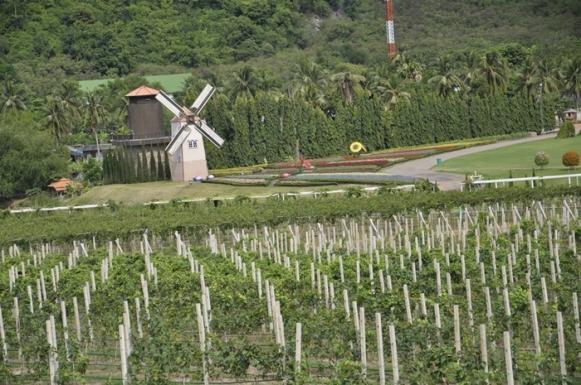 Silverlake Winery