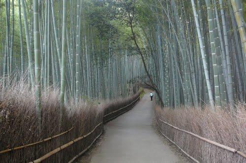 Jalan di Bamboo Groves Arashiyama