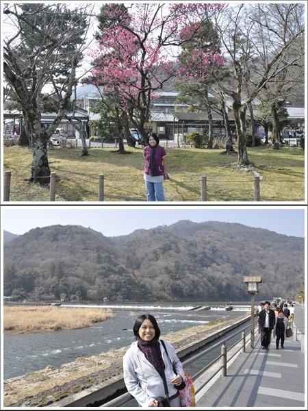 Satu-satunya Pohon Sakura Yang Mekar Di Taman Togetsukyo Bridge (Atas) dan Togetsukyo Bridge Versi Gundul Saya (Bawah)