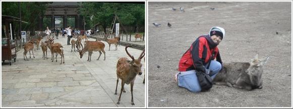 Rusa-Rusa Di Nara