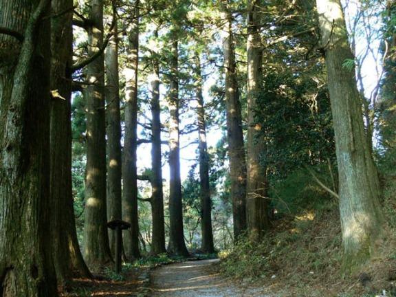 Ancient Cedar Avenue antara Moto-Hakone dan Hakone-machi