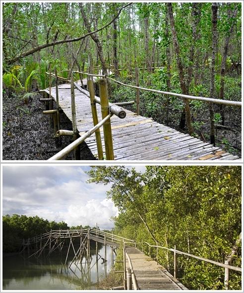 Bagian Dalam Bakhawan Eco Park