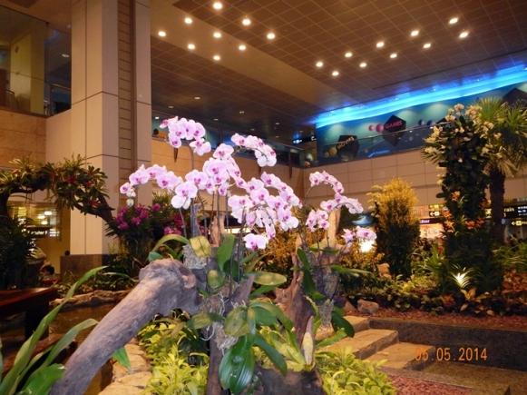 Salah Satu Sudut Orchid Garden