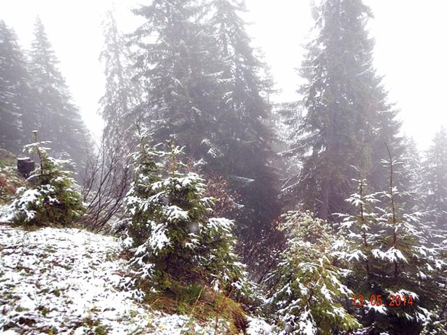 Pohon-pohon mulai tertutup salju